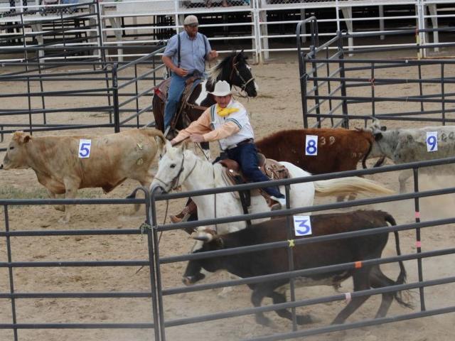 Prova de ranch sorting (Foto: Reprodução/ Acrissul)