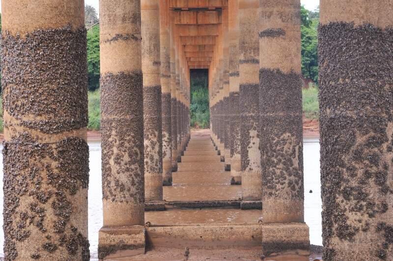 Em baixo da ponte é possível ver as marcas que a água deixou nas pilastras. (Foto: Alcides Neto)