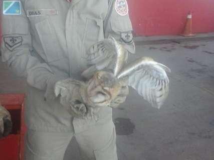 Coruja é o sétimo animal silvestre resgatado em área urbana este ano