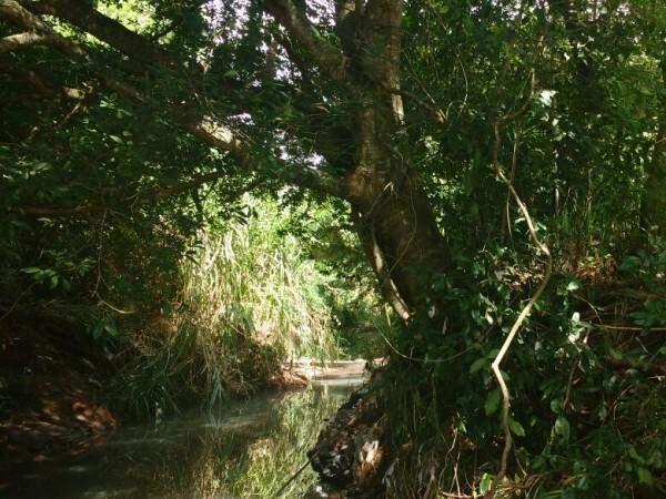 """Na hora das brincadeiras, cipó e galhos de árvores viram cordas para o """"tibum"""" da garotada. (Foto: Adriano Fernandes)"""