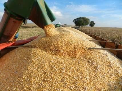 Colheita de milho avança, mas safra deve ser 31% menor devido ao clima
