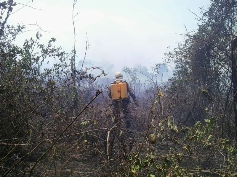 Bombeiros trabalham no combate às chamas (Foto: Divulgação/Bombeiros)
