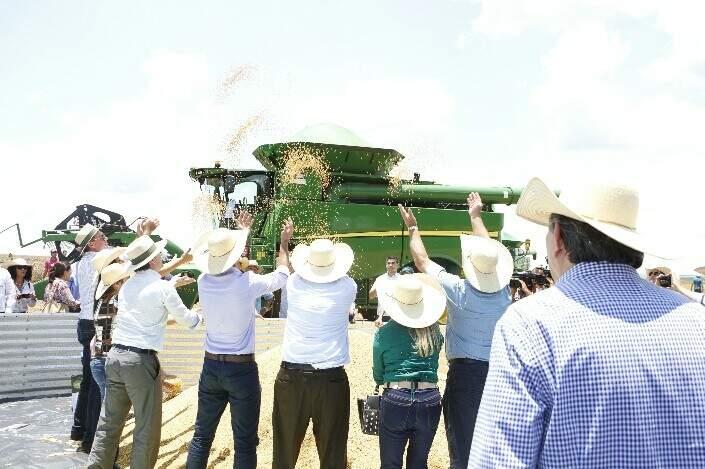 Autoridades durante a colheita hoje. (Foto: Helio de Freitas)