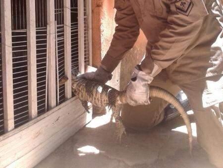 Réptil ficou preso à grade ao tentar entrar na casa (Foto: Divulgação/Bombeiros)