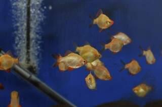 Peixes coletados para habitarem o aquário (Foto: Alcides Neto/Arquivo)