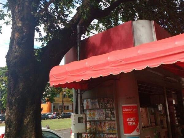 Árvore caída em cima de banca de revista preocupa proprietários (Foto:Amanda Bogo)