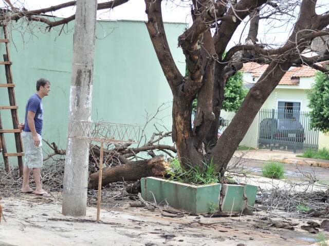 Árvore caiu no telhado. (Foto: Marlon Ganassin)