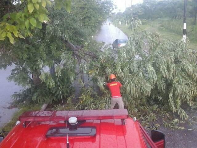 Bombeiros retiram árvore que ficou sobre avenida em Corumbá (Foto: divulgação / Corpo de Bombeiros)