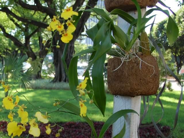 Mudas serão plantadas entre a 14 de Julho e a 25 de Dezembro (Foto: Simão Nogueira)