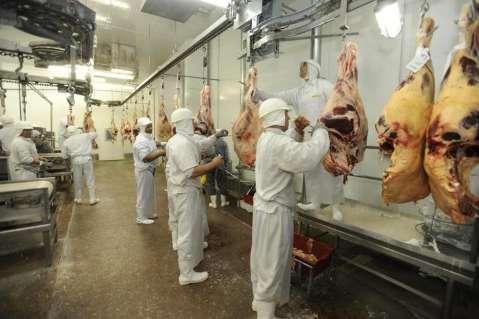Falta boi para abate e 26 frigoríficos do país já fecharam; 14 deles em MS