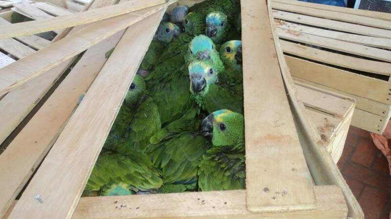 PMA vai encaminhar os animais ao CRAS. (Foto: PMA/ Divulgação)