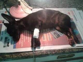 Vitória está recebendo alimento e medicação na veia (Foto: Reprodução/WhatsApp)