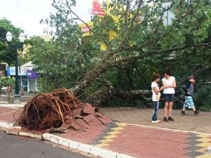 Vendaval derruba árvore em carro e causa estragos em cidade no Interior