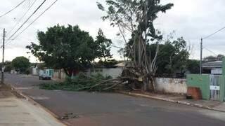 Árvore foi derrubada com a força dos ventos e arrebentou fios no Zé Pereira. (Foto: Direto das Ruas)
