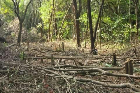 Área do Parque dos Poderes será desmatada para construção de prédio