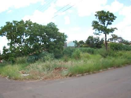 Rodeada por terrenos abandonados, comunidade reclama de descaso