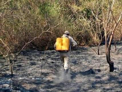 Corumbá bate recorde e tem maior número de queimadas do país