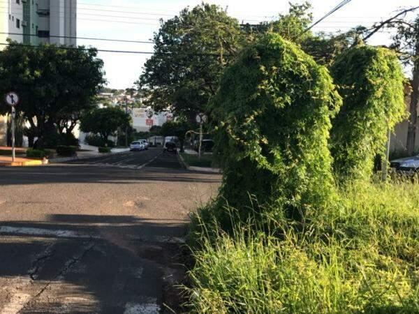 Placas foram tomadas pelo mato no cruzamento (Foto: Direto das Ruas)