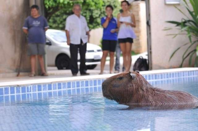 Em 2015, teve capivara em piscina, anta na Sesau e sucuri famosa na web