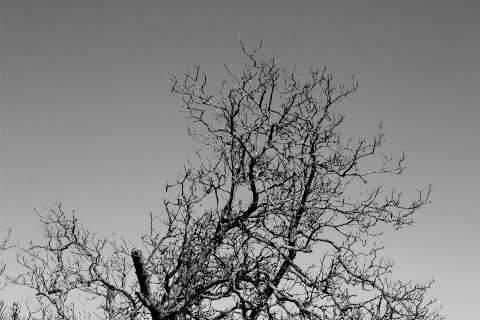 Designer foi buscar em árvores e raízes a beleza em preto e branco do Pantanal