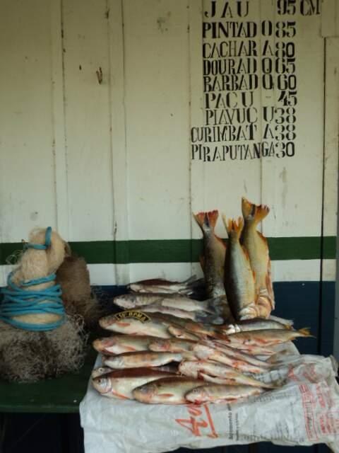 """Pescados foram encontrados na região do """"Barreirão"""". (Foto: Divulgação/PMA)"""