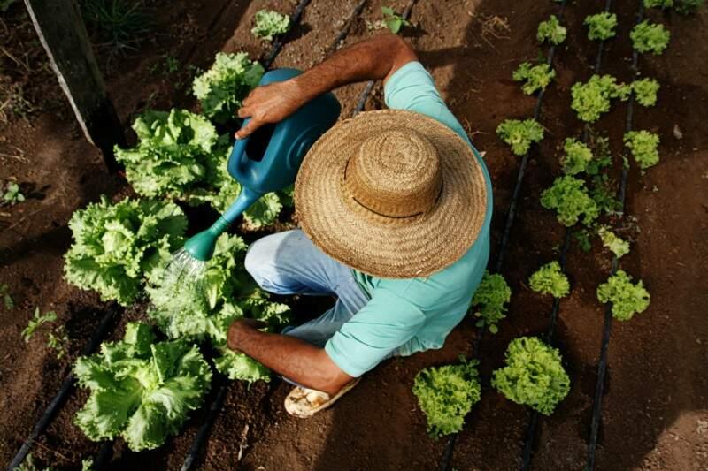 Alface, cebolinha, abobrinha e salsa são algumas das culturas cultivadas pelo produtor. (Foto: Cleber Gellio)