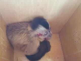 Animal recebeu atendimento veterinário e pode ser encaminhado para o Cras (Foto: Perfil News)
