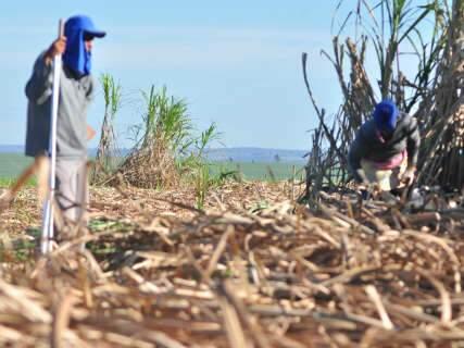 Mercado da cana emprega mais de 100 mil, mas ainda encontra críticas