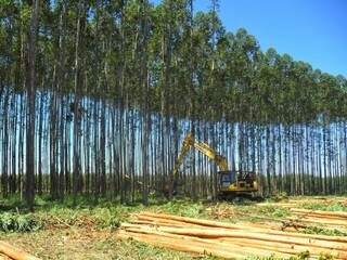 A multinacional é multada por terceirização ilícita das atividades de plantio, cultivo e extração de celulose. (Foto: Divulgação/Fibria)
