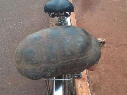 Funcionário da UFMS resgata jabuti na garupa da bicicleta