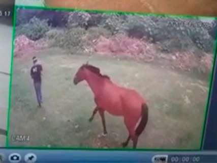 Homem furta cavalo que há 12 anos ajudava na Equoterapia em Corumbá