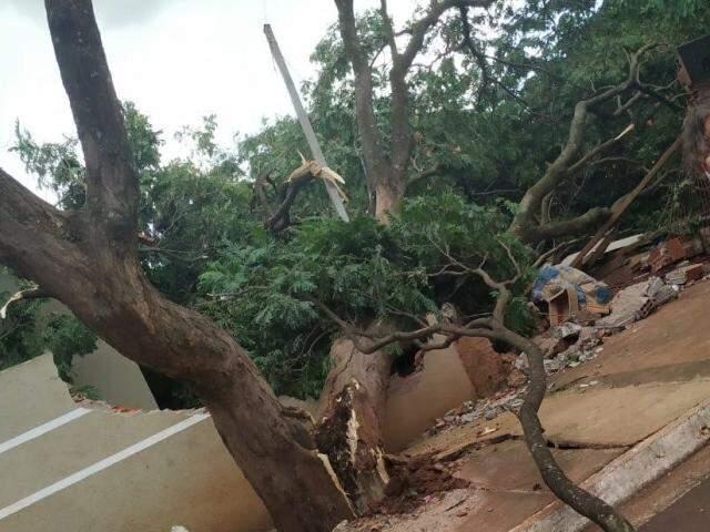 Árvore que caiu na Rua Carlos Ribeiro Garcete. (Foto: Dourados Agora)