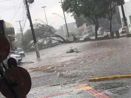 Durante chuva forte, árvore cai e interdita avenida em obras