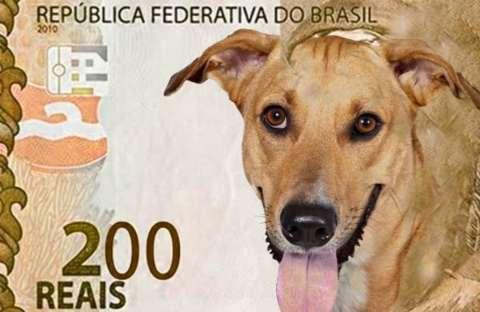 Banco Central anuncia nota de R$ 200 e personagem será lobo-guará