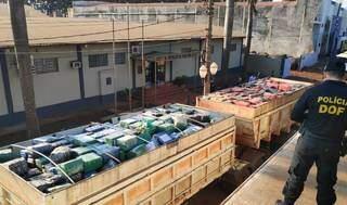 Carreta bitrem com 33,3 toneladas de maconha em frente à sede do DOF, em Dourados (Foto: Adilson Domingos)
