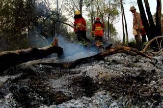 No maior incêndio florestal já registrado no bioma, Pantanal tem virado cinzas. (Foto: Divulgação Governo do Estado/Chico Ribeiro)