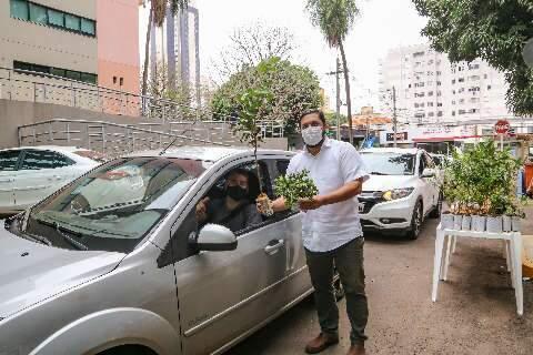 Drive thru da prefeitura entrega mudas frutíferas de graça na Central do Cidadão