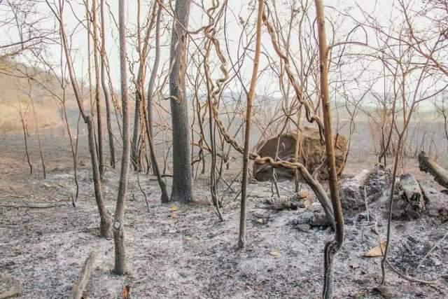 Produtor denuncia à polícia fogo em sua fazenda; nove casos já foram registrados
