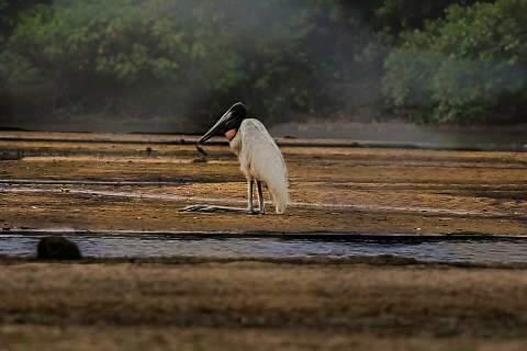 Assoreamento do Taquari pega carona com fogo do Pantanal