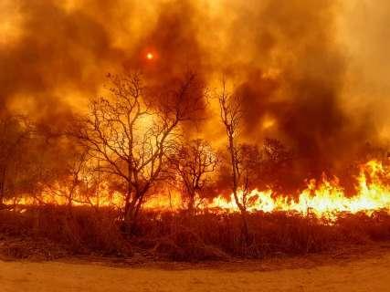 Sem nenhum boletim de incêndio nos últimos dois anos, denúncias explodem em 2020