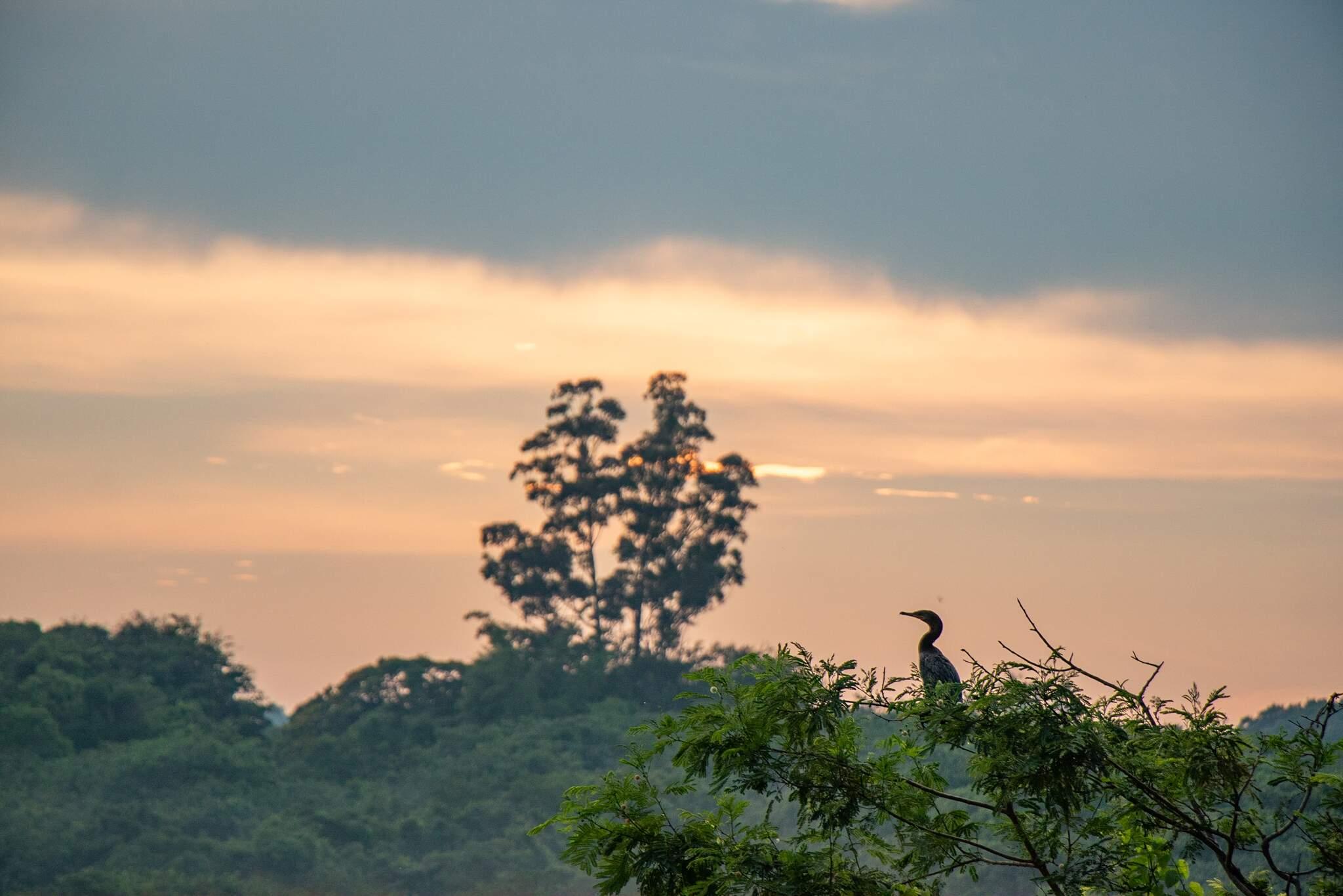 Amanhecer visto da região do Lago do Amor, na Avenida Senador Filinto Müller (Foto: Henrique Kawaminami)