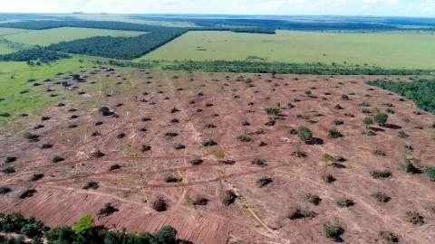 Governo federal ignora metas de combate ao desmatamento em plano até 2031