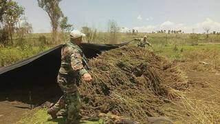 Agentes da Senad recolhem maconha picada que estava secando ao sol em lavoura no Paraguai (Foto: Divulgação)