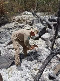 Filhote de veado é resgatado em área atingida pelo fogo na Serra do Amolar
