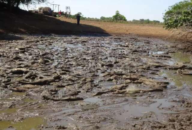 Doutora em jacarés estima que açude seco concentre mais de 4 mil animais