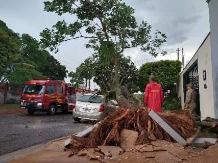Chuva destelhou bar, derrubou árvores e deixou moradores sem energia