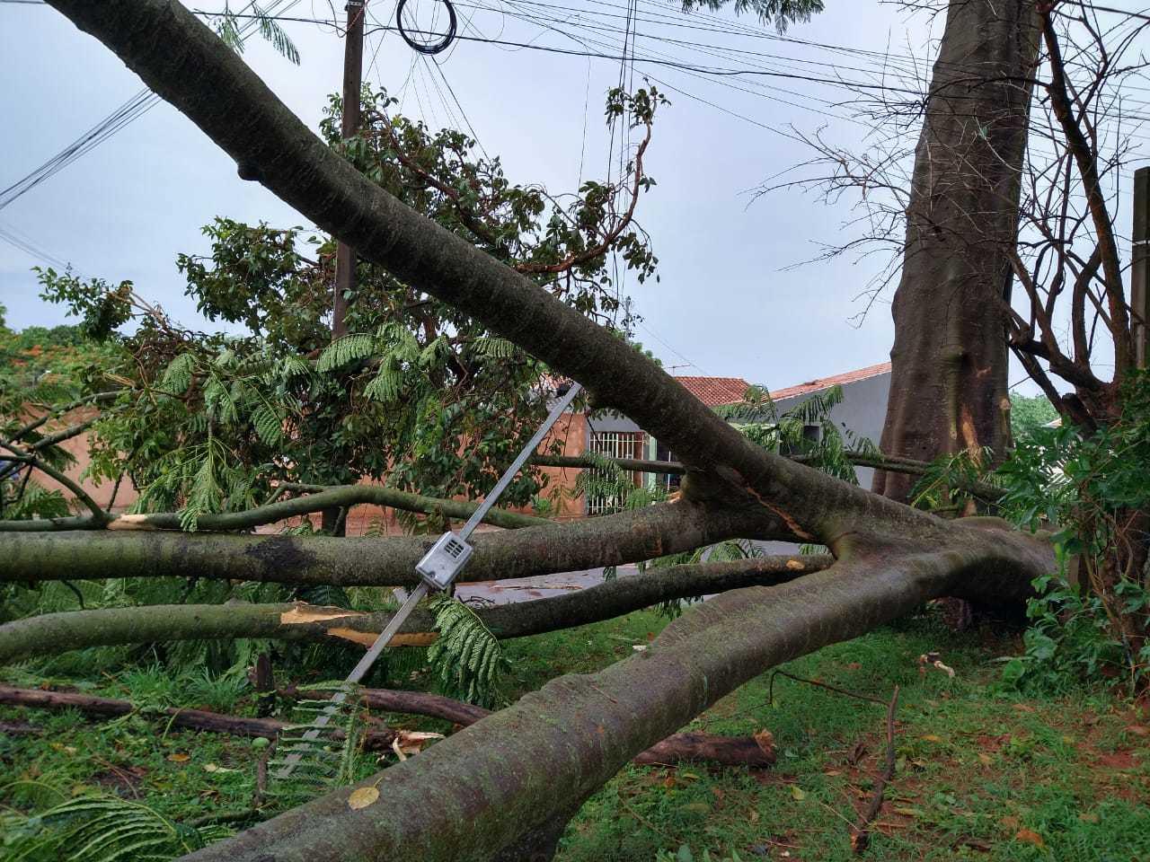 Ávore de grande porte caiu na Rua Iraúna e derrubou fios (Foto: Aletheya Alves)