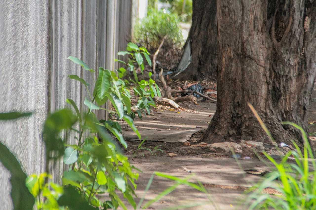 Pavimento é quase completamente encoberto pelo mato na Rua Engenheiro Roberto Mange. (Foto: Marcos Maluf)