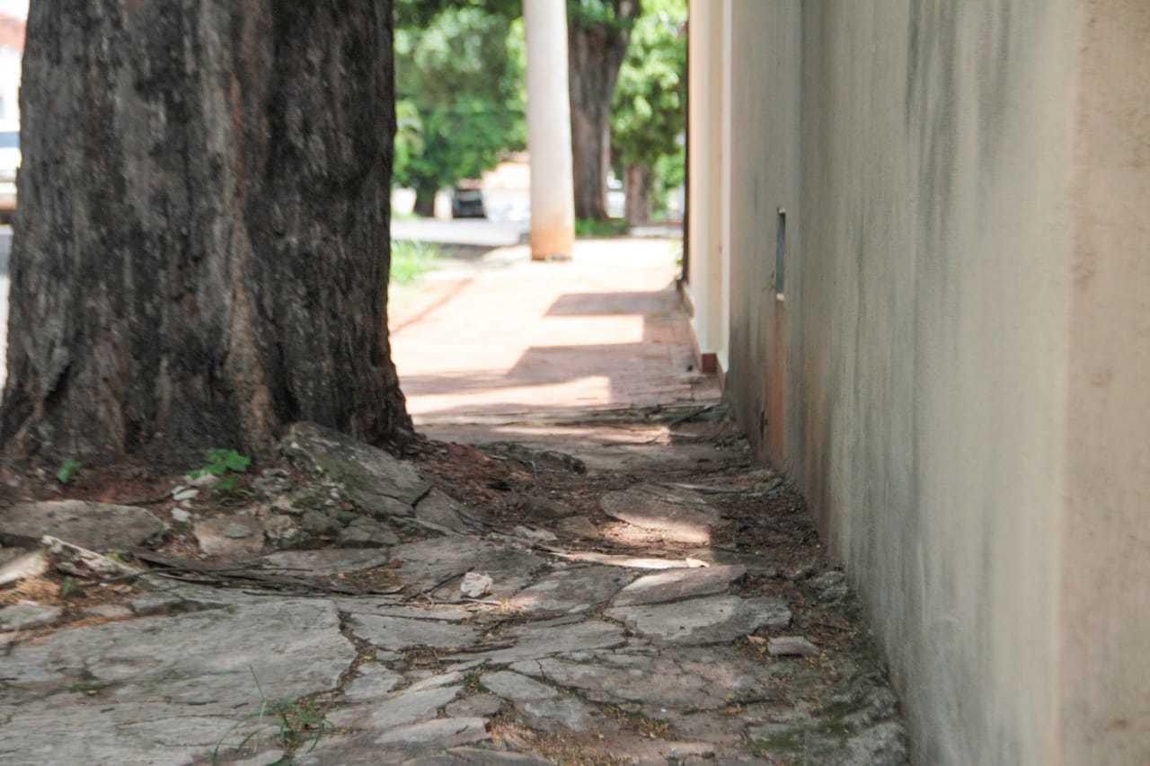Em alguns pontos, as raízes acabaram com o pavimentos, que há anos não vê manutenção. (Foto: Marcos Maluf)