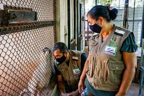 "Casal que vive em reserva testemunha salvamento de animais no ""ano do fogo"""